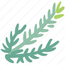 cooking, dill, food, herb, ingredient, taste icon