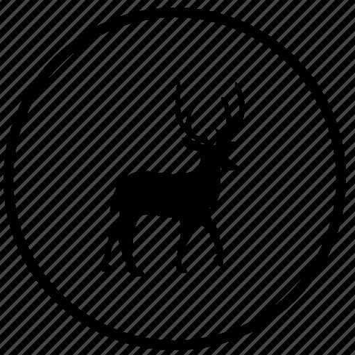 animal, deer, ecology, nature, trip, wild icon