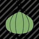ingredient, cooking, food, onion, vegetable, organic