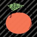 food, tomato, vegetable, fruit, sauce, ingredient