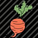 beet, beetroot, vegetable, radish, food, farm