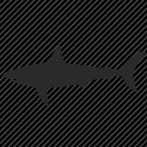 form, shark icon
