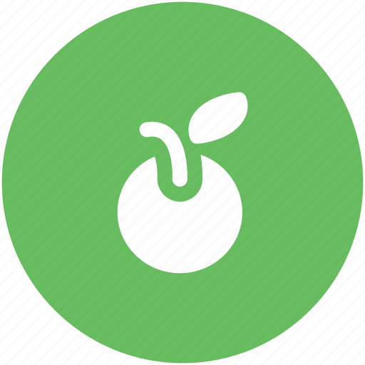 diet, food, fruit, healthy, nature, orange, organic icon