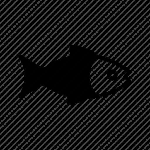 fish, fishery, fishing, peixe, pesca, pescado, poisson icon
