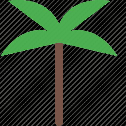 coconut, garden, nature, park, plant icon