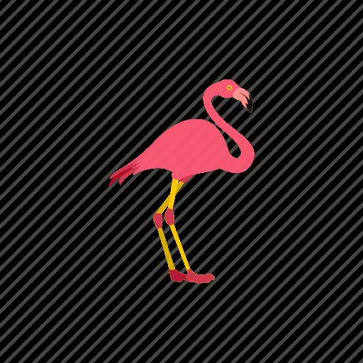 animal, bird, flamingo, nature, pink, wild, wildlife icon