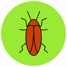 bug, cockroach, fly, insects, pest icon