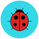 bug, fly, insects, ladybird, ladybug, nature icon