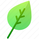biology, education, green, leaf, tree icon