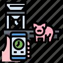 animals, farm, feeder, pig, smart, time