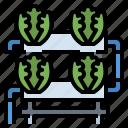 farm, hydroponic, organic, smart, water