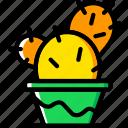 cactus, flower, garden, plant, soil