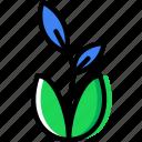 flower, garden, plant, soil