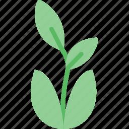 flower, garden, plant, soil icon