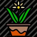flower, garden, plant, pot, soil