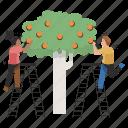 food, equality, gender, ladder, man, woman, fruit icon