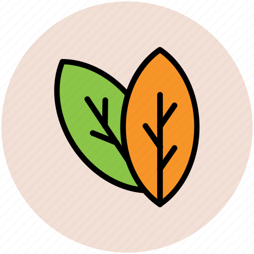 ecology, leaves, nature, plant leaves, tree leaves icon