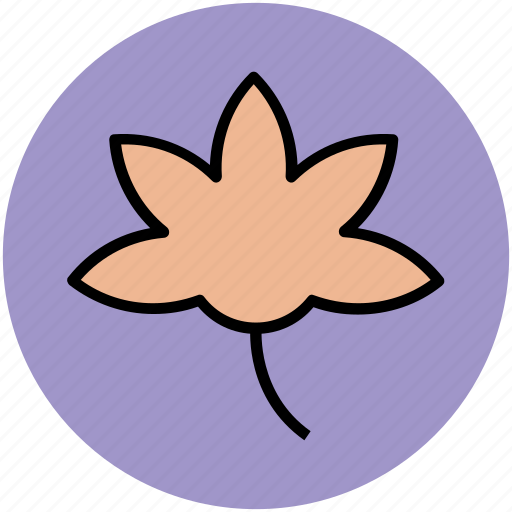 beauty, blossom, eco, flower, flower petals, nature, spring flower icon