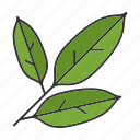 bay, culinary, herb, leaf, seasoning, spice, taste icon