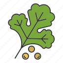 condiment, coriander, flavor, herb, seasoning, seed, spice icon
