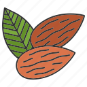 almond, amygdalaceous, condiment, flavor, nut, seasoning, spice icon