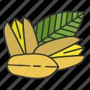 culinary, ingredient, pistache, pistachio, seasoning, spice, taste icon