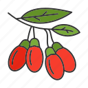 berry, branch, goji, goji berry, plant, spice, culinary