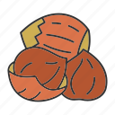 culinary, hazelnut, ingredient, nut, seed, spice, taste icon