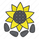 culinary, flower, helianthus, ingredient, seed, spice, sunflower icon