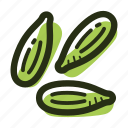 cardamom, cook, green cardamom, herb, ingredient, plant, spice icon