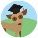 dog, graduation cap, sports, training icon