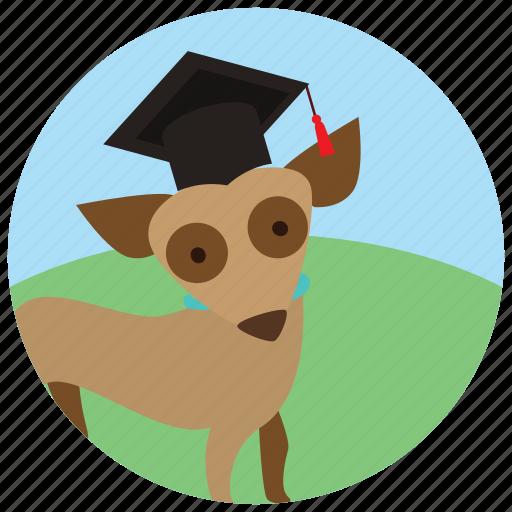 dog, graduation cap, sports, training icon
