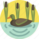 pond, nature, lake, duck, animal, spring icon