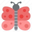 butterfly, animal, nature, fly