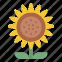 sunflower, blooming, flower, nature