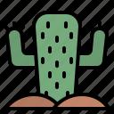 cactus, plant, wild, nature