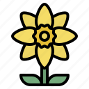 daffodil, blooming, flower, nature