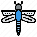 dragonfly, animal, nature, wild