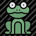frog, animal, nature, wild
