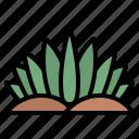 grass, nature, wild, plant