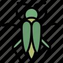 grasshopper, bug, nature, wild