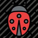 ladybugs, animal, nature, bug