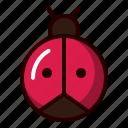 lady, beetle, ladybug, insect, bug