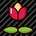 rose, floral, flower, spring