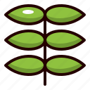 sprout, growth, plant, nature