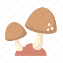 mushroom, fungi, nature