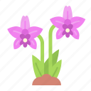 orchid, flower, blossom, nature