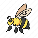 bee, insect, animal, fly