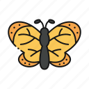 butterfly, insect, animal, moths