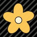 flower, blossom, petals, nature